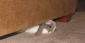 bunny couch